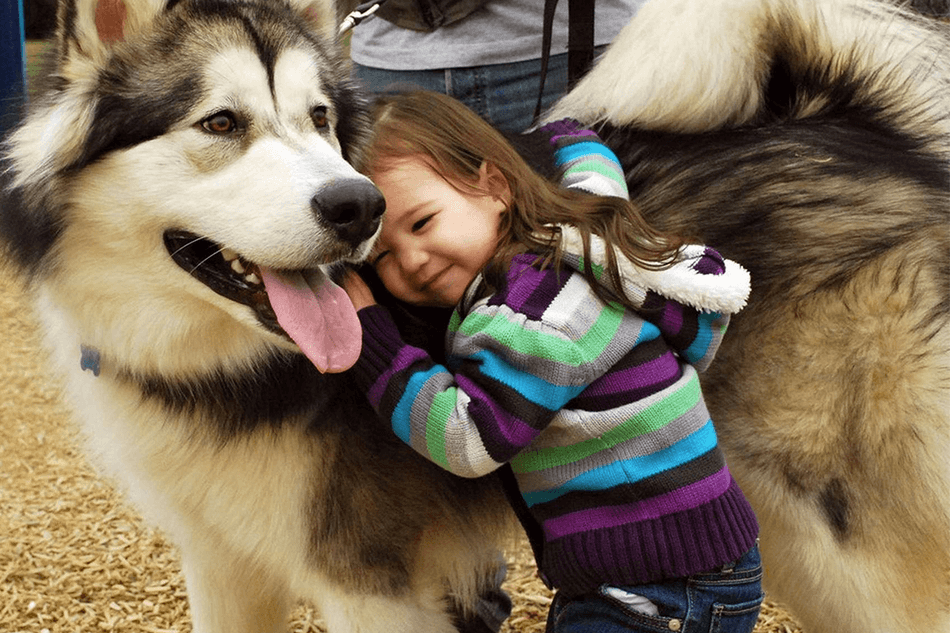 dog_lovers_apps